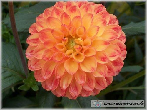 Trauer-Blumen_0071