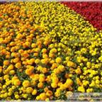 Trauer-Blumen_0024