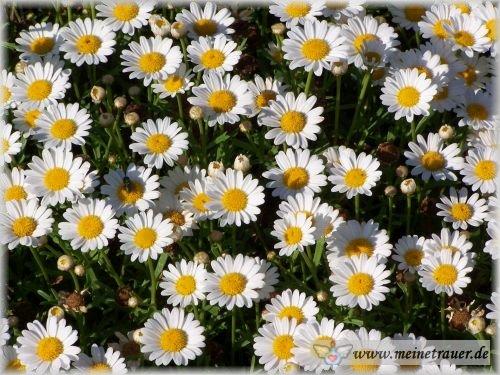 Trauer-Blumen_0016