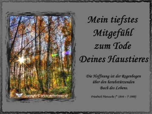 trauerkarte-haustier_006