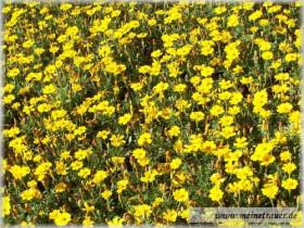 Trauer-Blumen_0018