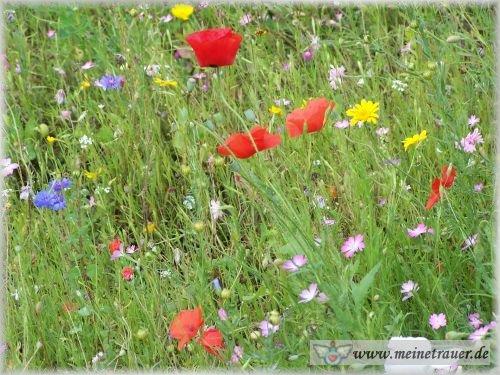 Trauer-Blumen_0053