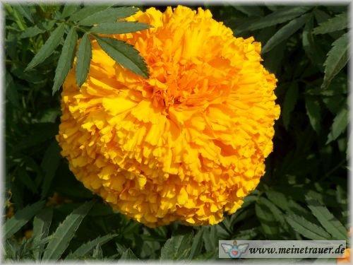 Trauer-Blumen_0087