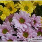Trauer-Blumen_0100