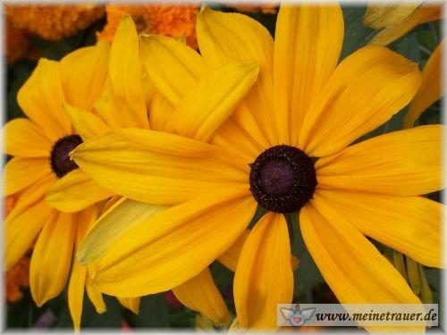 Trauer-Blumen_0064