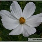 Trauer-Blumen_0063