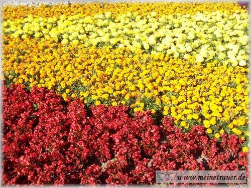 Trauer-Blumen_0026