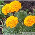 Trauer-Blumen_0004