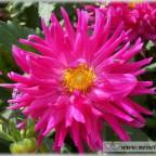 Trauer-Blumen_0083