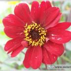 Trauer-Blumen_0061