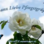 pfingsten_karten_1006_600x450